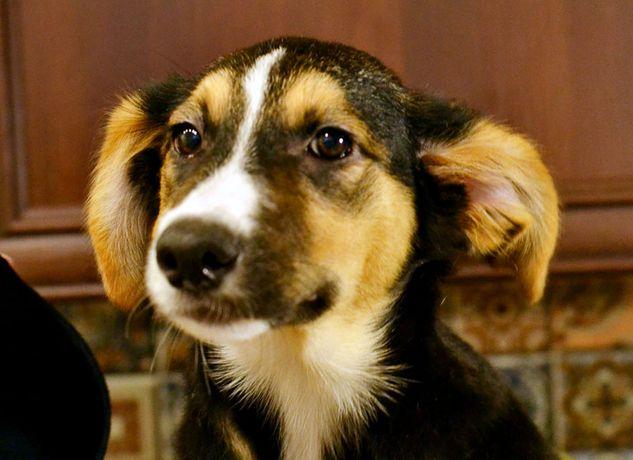 Замечательный щенок Белль - очень ждет добрых Хозяев!