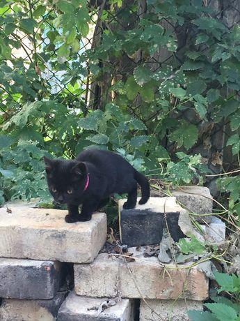 Кіт, кішка, кошенята, біле, чорне, руде, сіре