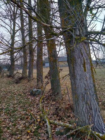 Продам дерева