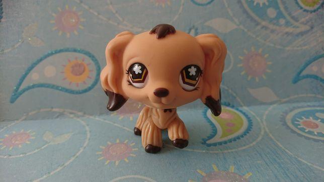 Oryginalny Littlest Pet Shop Spaniel 575 Pies
