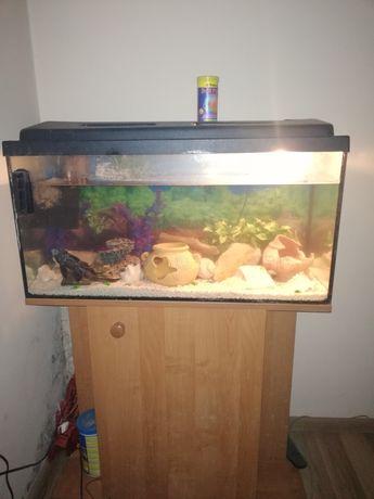Akwarium 120l z wyposazeniem