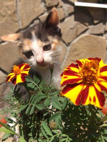 Маленький котенок ищет новых родителей!