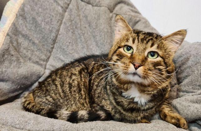В поисках любимого хозяина полосатый кот Джмелик (9 лет)