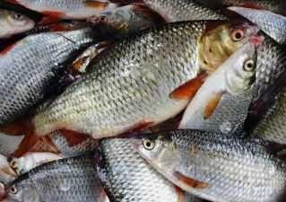 Płoć Świeże ryby