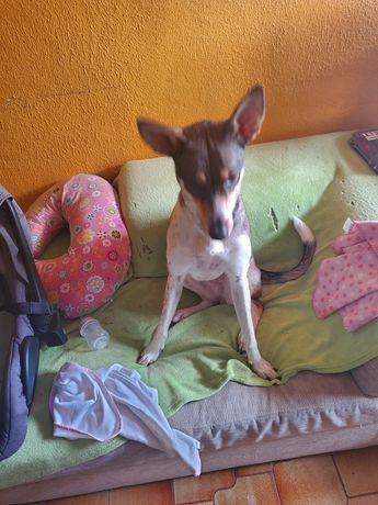 Moxxi Cachorrinha de 1 ano e 3 meses