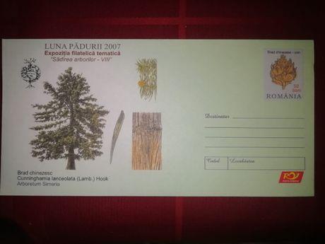 cartas inteiras floresta Roménia