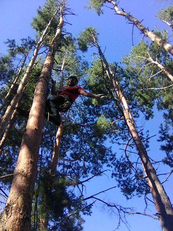 Видалення проблемних і аварійних дерев