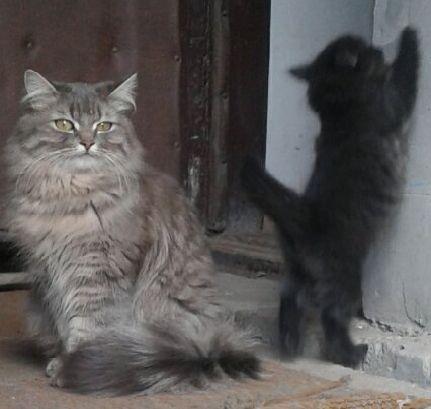 Отдам бесплатно котят в добрые руки
