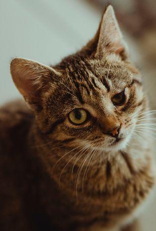 Cudowny miziak 4/5 miesięczna kotka Oszi szuka domu