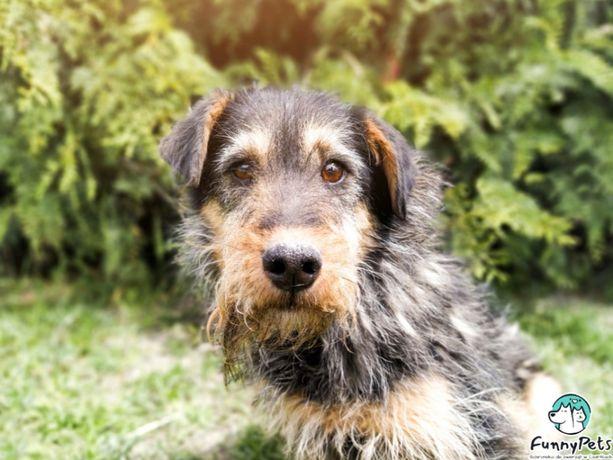 Wyjątkowej urody, lękliwy pies Talarek do adopcji!
