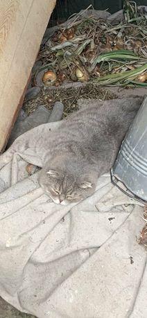 Пропала кошка в ПУТИВЛЕ