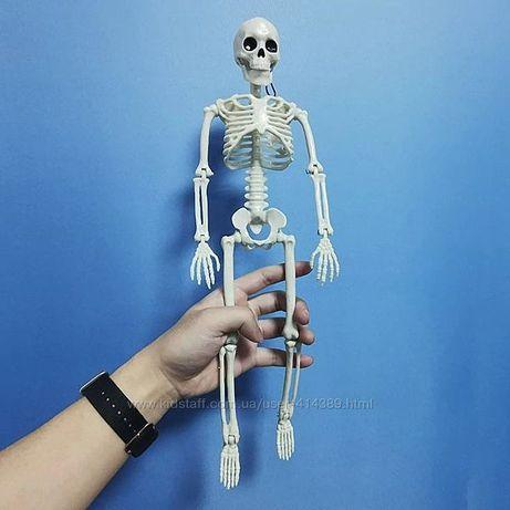 Скелет человека .Большой 40 см Все суставы подвижны.