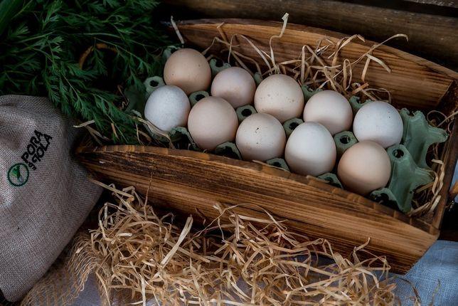 Jaja kurze wiejskie