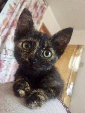 Отдам котёнка-девочку Масю
