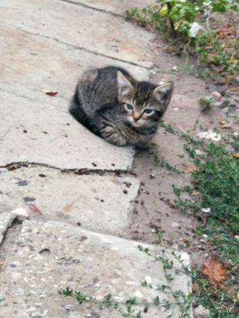 Котенок кошечка в добрые руки счастье в дом