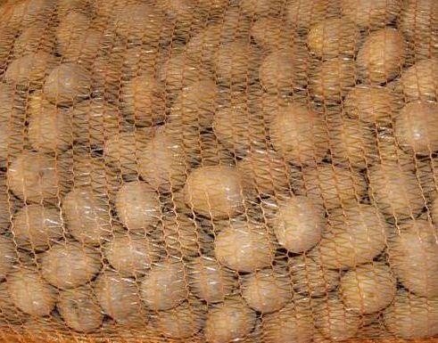 Ziemniaki jadalne odmiana BRYZA Brydza kaliber jak sadzeniak 3,5 -5cm