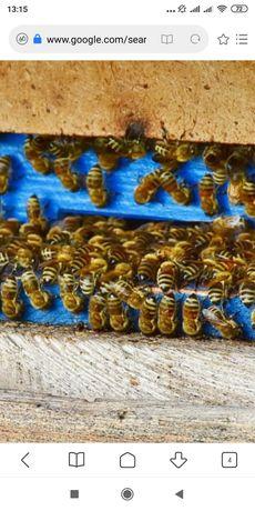 Продам вулики із бджолами. Договірна ціна