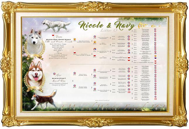 Zapowiedź Miotu Szczeniaczków Siberian Husky