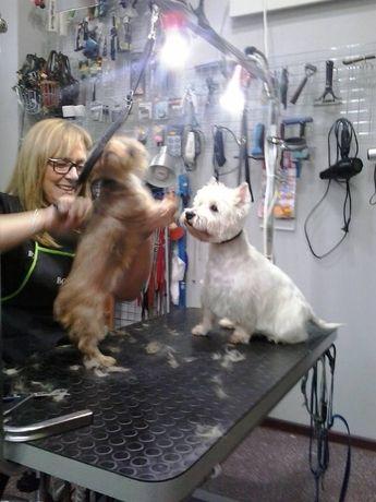 Strzyżenie, trymowanie psów , masaż leczniczy zwierząt.