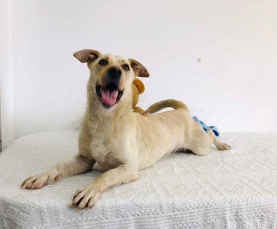 Shelby - cão de porte pequeno / médio
