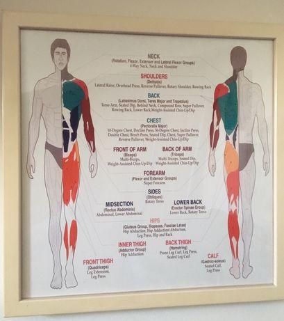 Quadro Técnico c/ Diferentes Grp Musculares