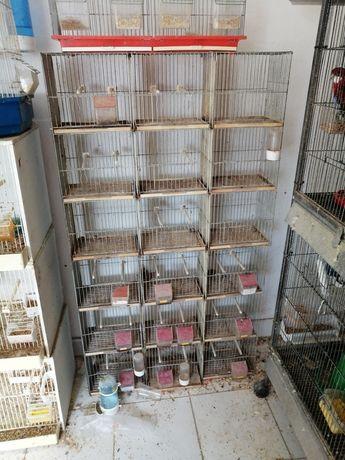 Várias Gaiolas para Pássaros ou Roedores