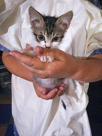 Нежный котёночек Кузя (2 месяца) СРОЧНО в добрые ручки!