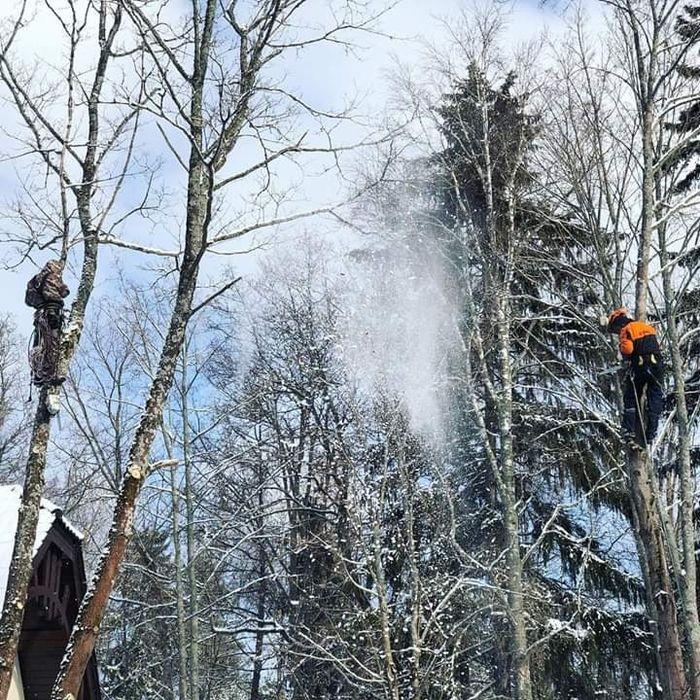 Производим спил деревьев и участников  Бесплатно Дніпро - зображення 1