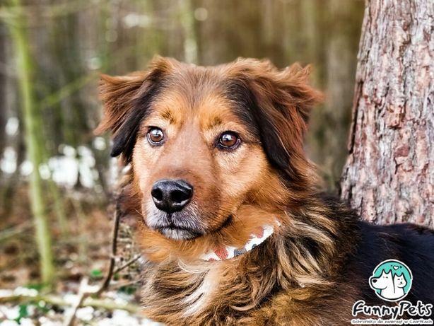 Cudowny, przyjazny pies Audio poleca się do adopcji!