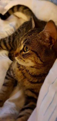 Ищу семью для котика!!!