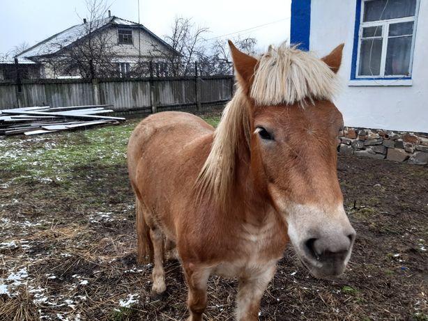 Продам молоду кобилу лошадь