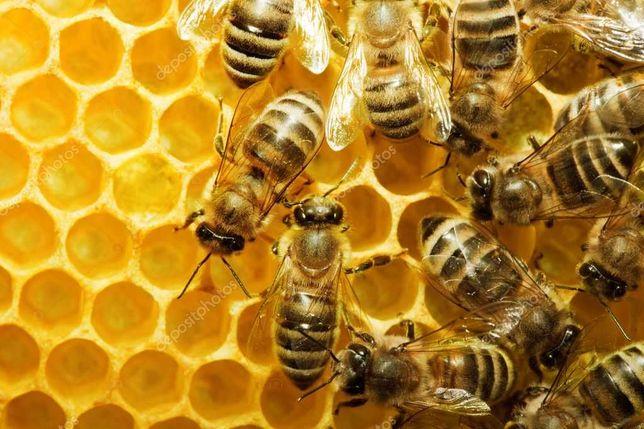 Пчелы, пчелопакеты.