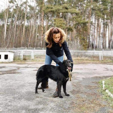 Собака в хорошие руки! Чилли ждет свою семью!