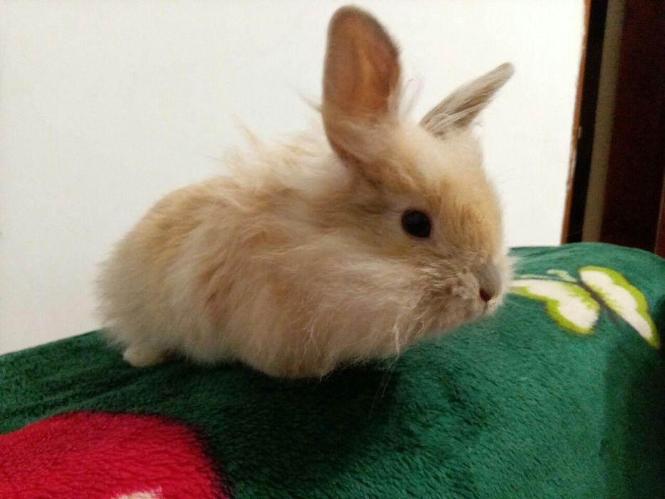 Кролик на ВЯЗКУ! Первомайск - изображение 1