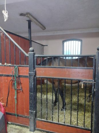 Boks stajnia dla konia Wadowice