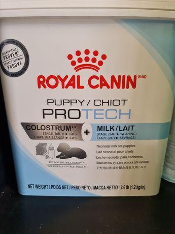 Leite Royal Canin