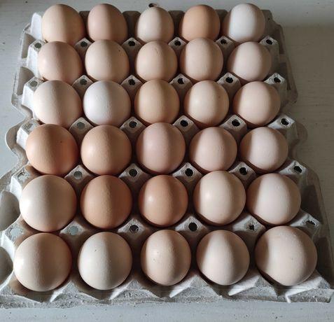 Jaja, jajka wiejskie, świeże