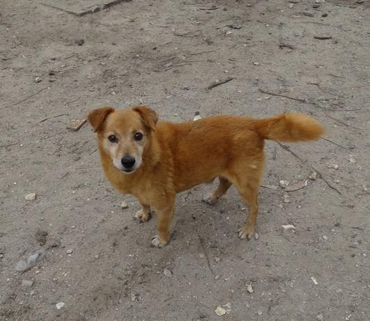 Pipo- cachorro de porte pequeno para adoção