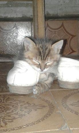 Кошечка котенок бесплатно