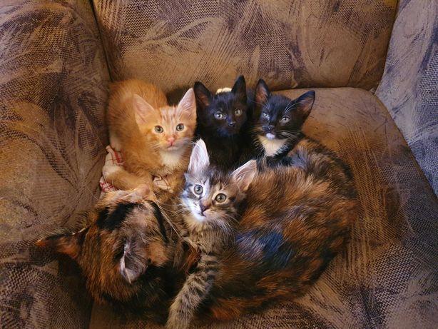 Котенята (1 котик 3 кішки)