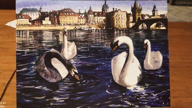 Swans of Prague / Łabędzie Pragi