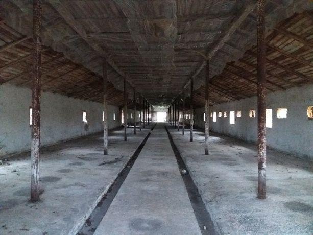 Промисловий комплекс, земля 2,5га оренда смт. Бібрка (пташники)