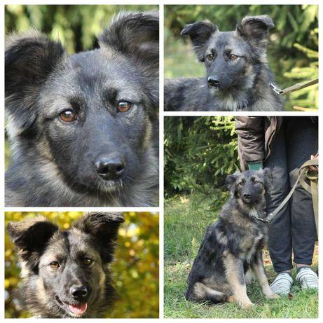Пушистая красавица Мила, собака, небольшая, ласковая, 1 год
