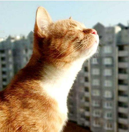 Почувствуй запах свободы...купи квартиру