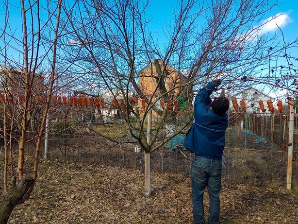 Обрезка сада, ОБРЕЗКА садовых деревьев, САДОВНИК уход за садом