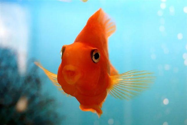 Чистка аквариума. Лучшие цены!!!