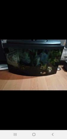 Akwarium panoramiczne 54l