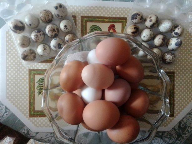 Ovos de galinha e cordonizes