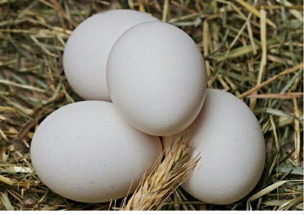 Jajka jaja swojskie z wolnego wybiegu duże