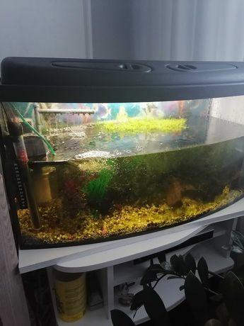 Akwarium z oprzyrządowaniem 110 L